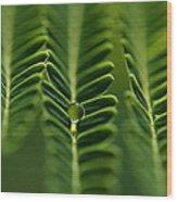 A Green Drop Wood Print