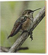 A Little Tired Hummingbird Wood Print