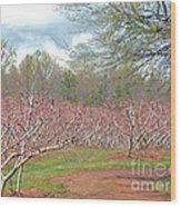 A Peach Orchard   Wood Print