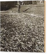 A Run Of Squawfish Stranded In Kelsey Creek Near Kelseyville Lake County April 29 1899 Wood Print