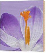 Abstract Purple Crocus Wood Print
