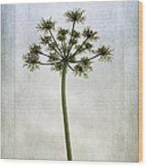 Aethusa Cynapium Wood Print