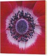 Anemone Coronaria Harmony Scarlet Flower Wood Print