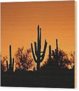 Arizona Sagurao Sunset Wood Print