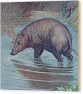 (babirusa Alfurus)        Date 1909 Wood Print
