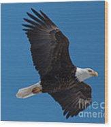 Bald Eagle In Flight 6 Wood Print