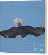 Bald Eagle In Flight 8 Wood Print