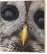 Barred Owl Eye's Wood Print