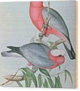 Birds Of Asia Wood Print