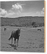Black And White Pasture With Three Horses Wood Print