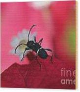 Black Bug Wood Print