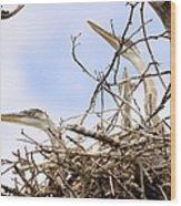Blue Heron Rookery 7214 Wood Print