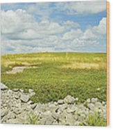 Blueberry Field With Blue Sky And Clouds In Maine Wood Print