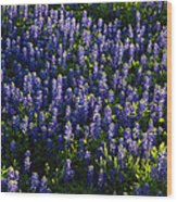 Bluebonnets In The Limelight Wood Print
