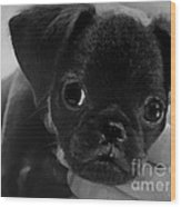 Brussel Griffon Puppy Painting Wood Print
