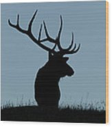 Bull Elk At First Light Wood Print