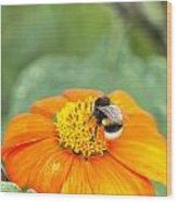 Bumble Bee 01 Wood Print