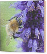 Bumblebee On Buddleja Wood Print