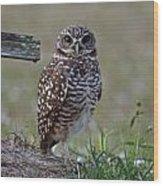 Burrowing Owls - Watching You 3 Wood Print