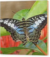 Butterfly Beauty And Grace Wood Print