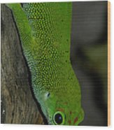 Climbing Giant Day Gecko Wood Print