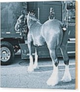 Clydesdale In Black And White Wood Print
