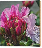 Coast Rhododendron Wood Print