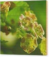 Currant In Bloom Wood Print