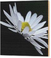 Daisy 4 Wood Print