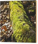 Dead Log With Moss Wood Print