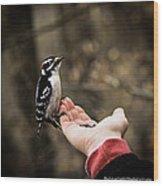 Downy Woodpecker In Hand Wood Print