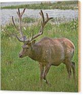 Elk At Pond Edge Wood Print