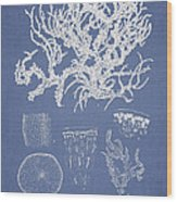 Eucheuma Spinosum Wood Print by Aged Pixel