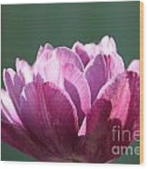 Exotic Tulip Wood Print