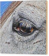 Eye Of A Horse Wood Print