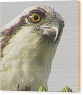 Eye Of The Osprey Wood Print
