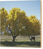 Fall In Bishop California Wood Print