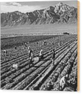 Farm Workers And Mount Williamson Wood Print