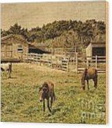 Feral Horses Of Ocracoke Wood Print