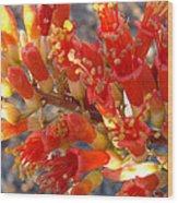 Fiery Orange Flower Wood Print