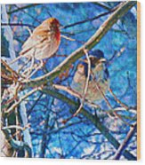 Finch And Blue Jay - California Winter Day Wood Print