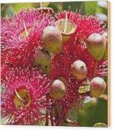 Flowering Gum W Ants Wood Print