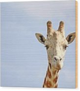 Friendly Giraffe Wood Print