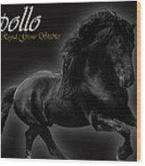 Friesian Stallion Wood Print