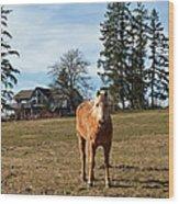 Horse Unbrideled Wood Print