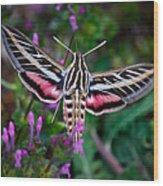 Hummingbird Moth Print Wood Print