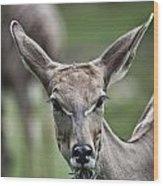 I Am All Ears Wood Print