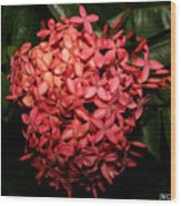 Ixora Night  Wood Print