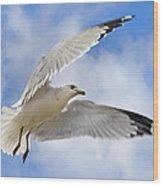Jekyll Island Seagull Wood Print