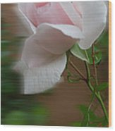 July  Rose Thought Wood Print